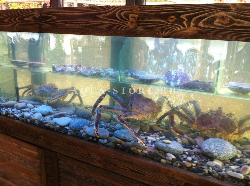Бизнес выращивание в аквариуме 1000